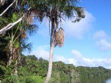 Tamobpata River