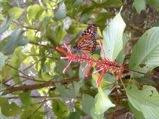 Butterfly in Tambopata Reserve, Peru