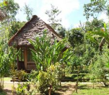 Rainforest Lodge Accommodation