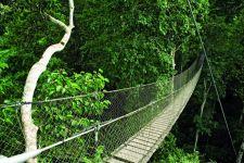 Canopy walkway at Inkaterra Reserva Amazonica