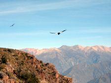 Cruz del Condor, Colca Canyon, Arequipa