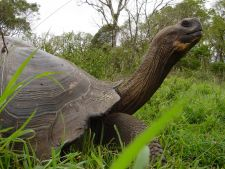Galapagos Giant Tortoise by Francisco Dousdebes
