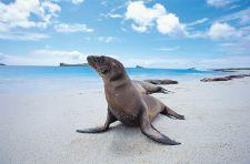 Galapagos Sea Lion by Raul Gil