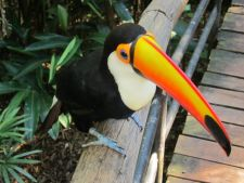 Bird Park, Iguassu Falls, Brazil
