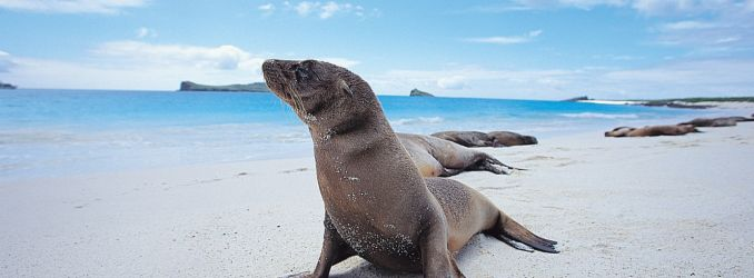 Galapagos Sea Lion by Raul Gil